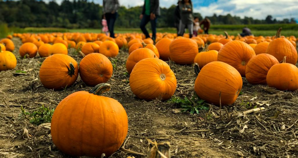 families at a local pumpkin patch for halloween