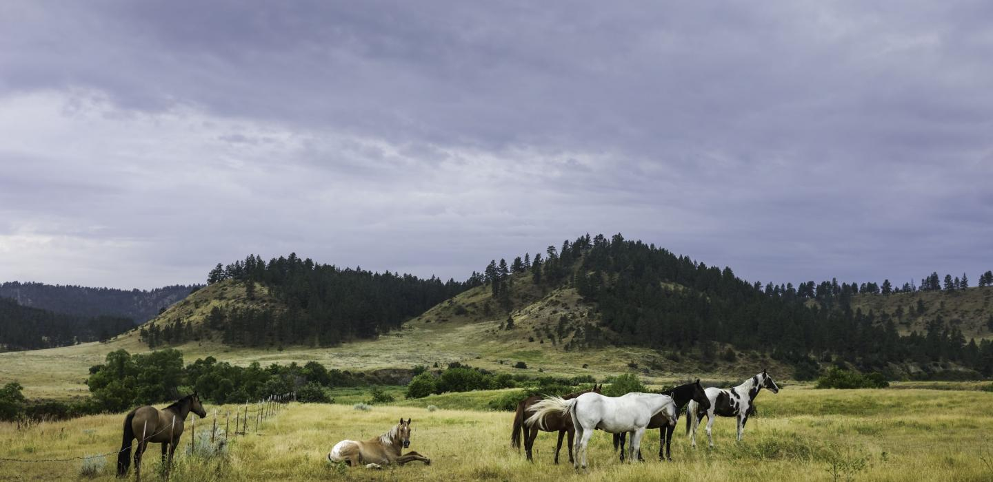 Farmland with horses and hills located in Montana.