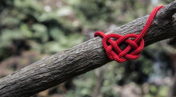 Heart made of wool on a tree